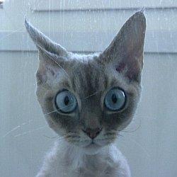 По каким причинам линяют кошки?